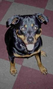 Rasha 1996-2008